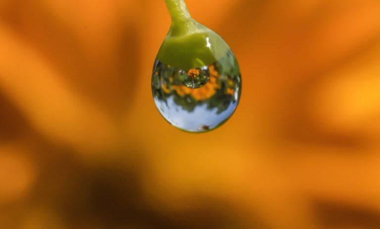 Im oberen Teil des Wassertropfens eine Luftblase. Darin ein aufrechtes Bild der Ringelblume