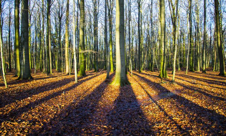 Die Schatten der Buchen verlaufen parallel. Weil sie auf uns zu kommen, laufen sie perspektivisch in ihrem Fluchtpunkt zusammen.