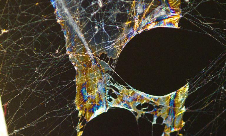 Die folgenden Bilder zeigen die Schleimspuren von Schnecken auf Spinnenweben.