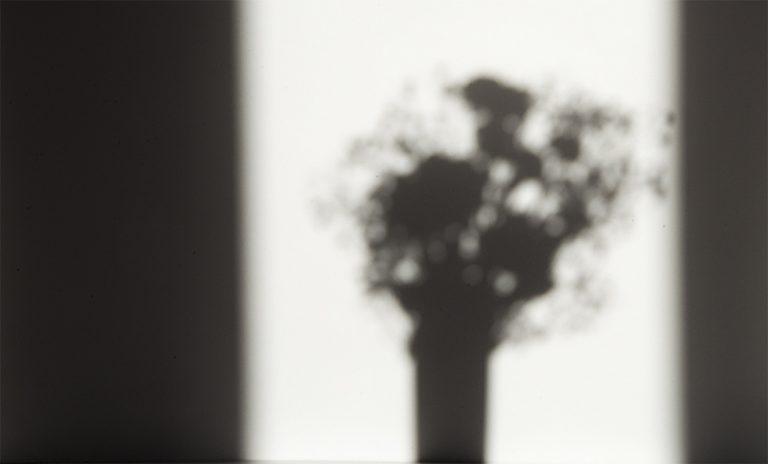 sogar im Schatten eines Blumenstraußes